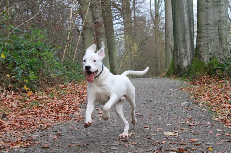 chien-promenade