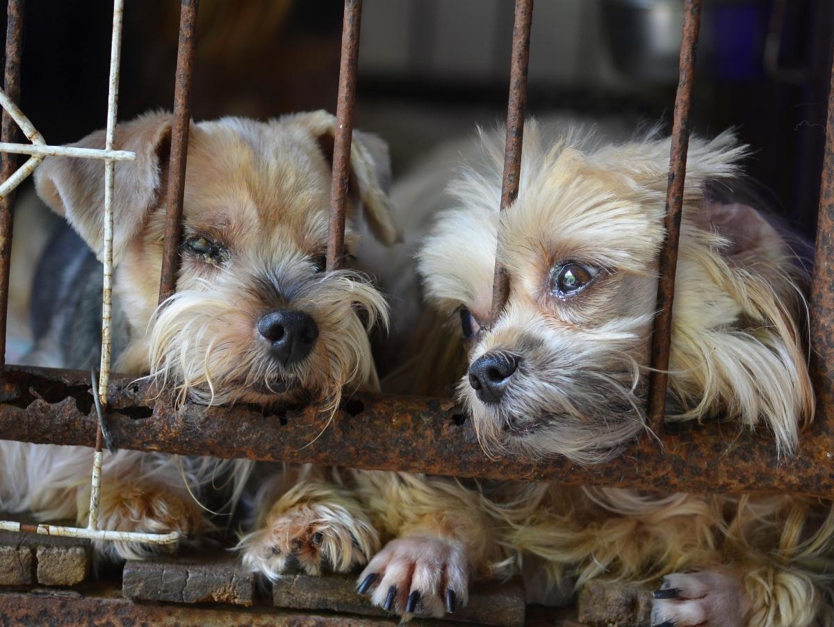 MEPs for regulation of online pet trade