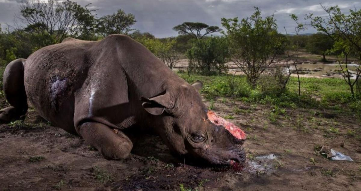 Brent Stirton - wildlife photographer of the year