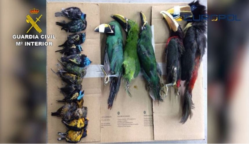 Europol birds