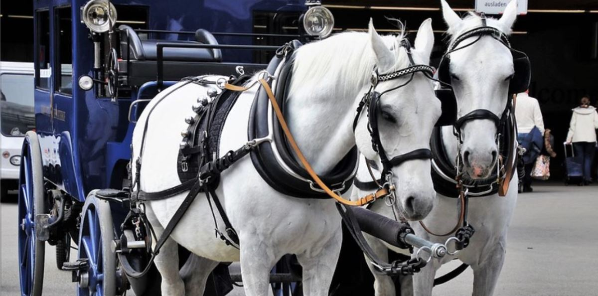 Barcelona bans horse carriages