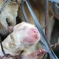 China Yulin dog meat festival - hell on earth