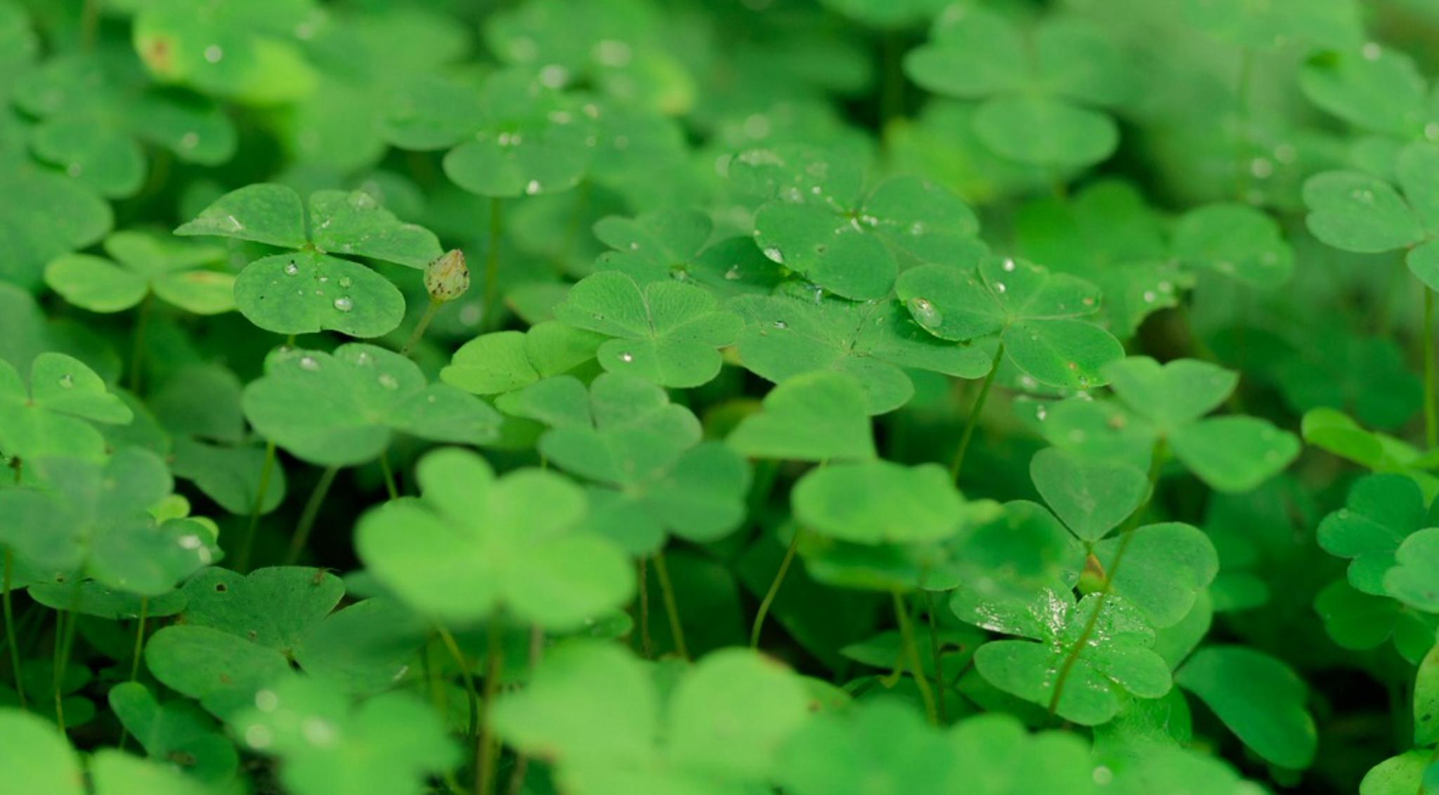 Dublin Greens remarkable rise