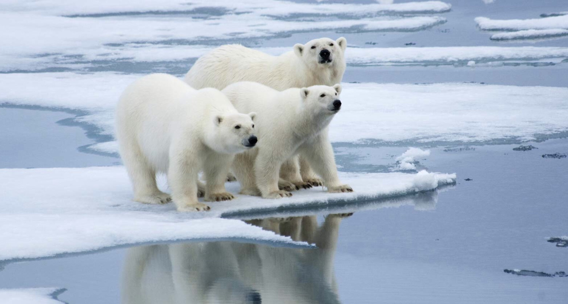 EU updates Arctic policy