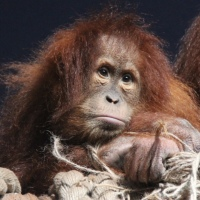 Krefeld Zoo apes cremated alive