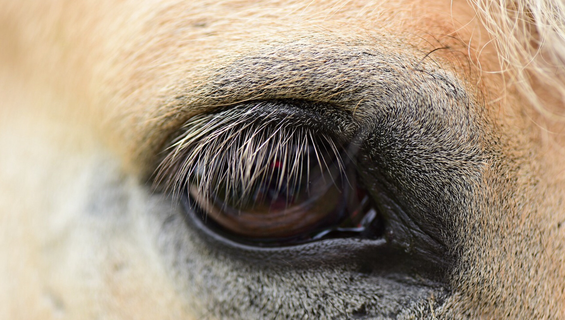 Spain horsemeat sham