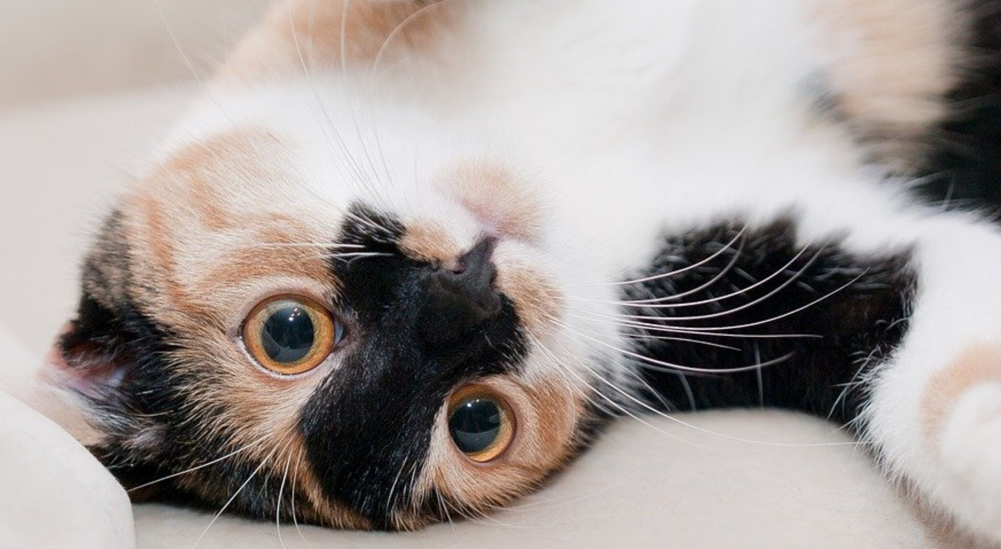Aeroflot destroyed cats in luggage