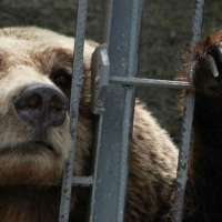 Albania endemic animal cruelty