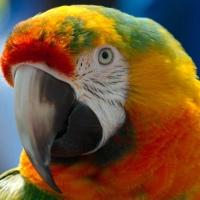 Europol: Spain exotic birds traffickers arrests