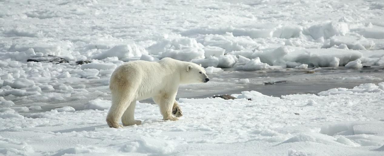 EU preservation of Arctic policy